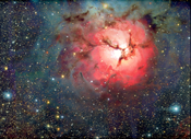 Trifid nevel